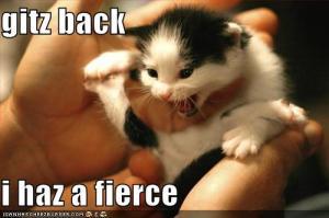 Fierce Kitten